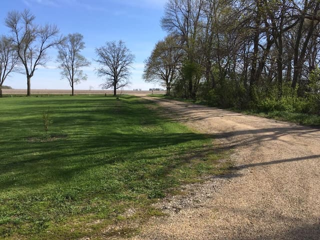 Long driveway, with large yard to say play a game of soccer!  And large grove to the west.