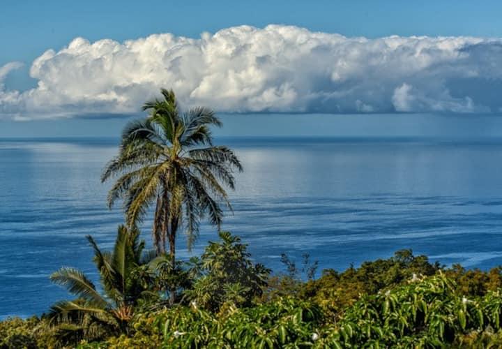Tropical garden  above Kealakekua Bay.