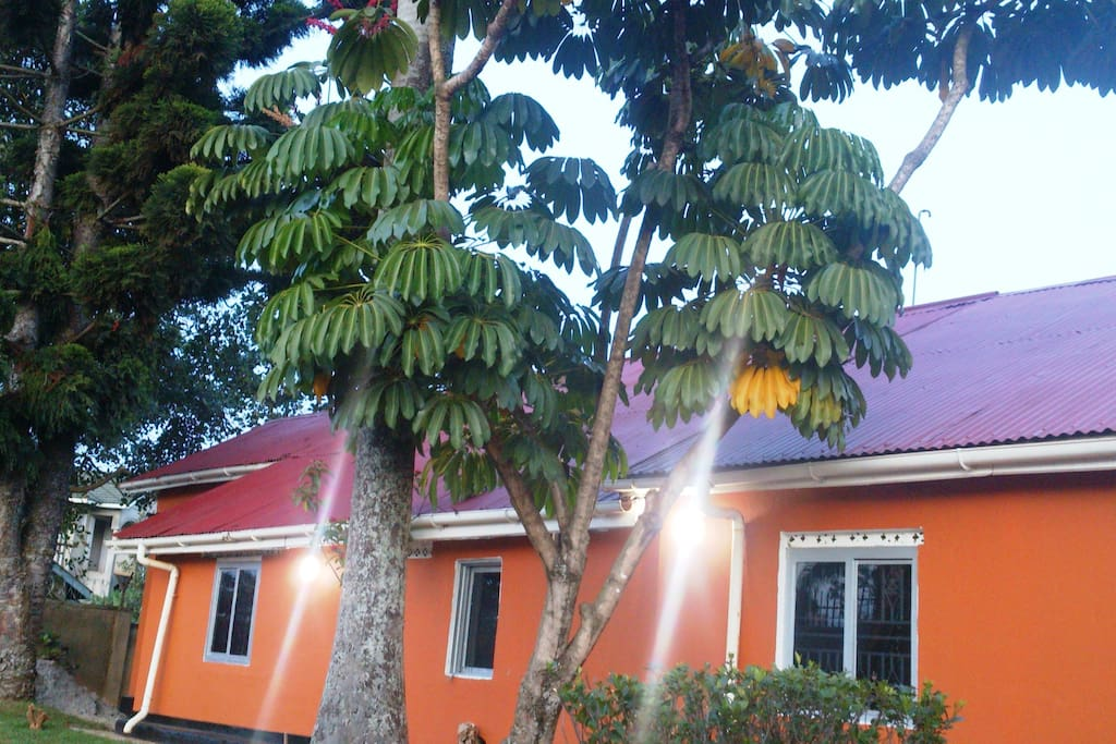 the front view of our house with the nice tall ever green tree plantations