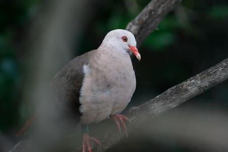 Sm Lodge - The Pink Pigeon - Trou d'Eau Douce
