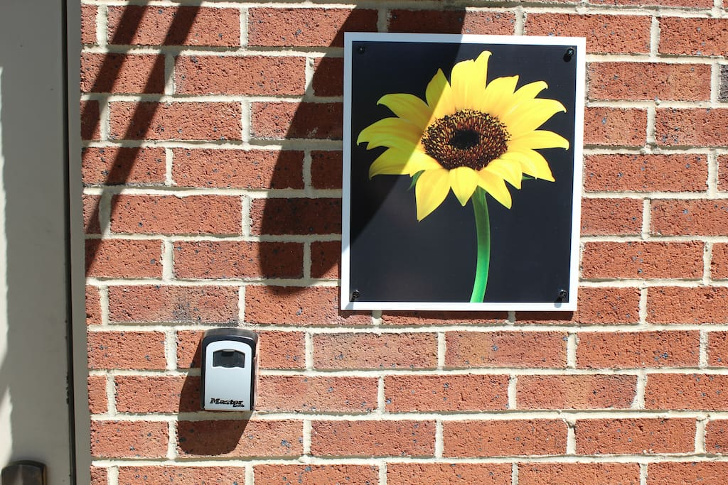 Sunflower and key box outside