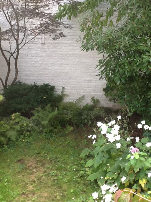 Small garden at the back of the house. No neighbourh