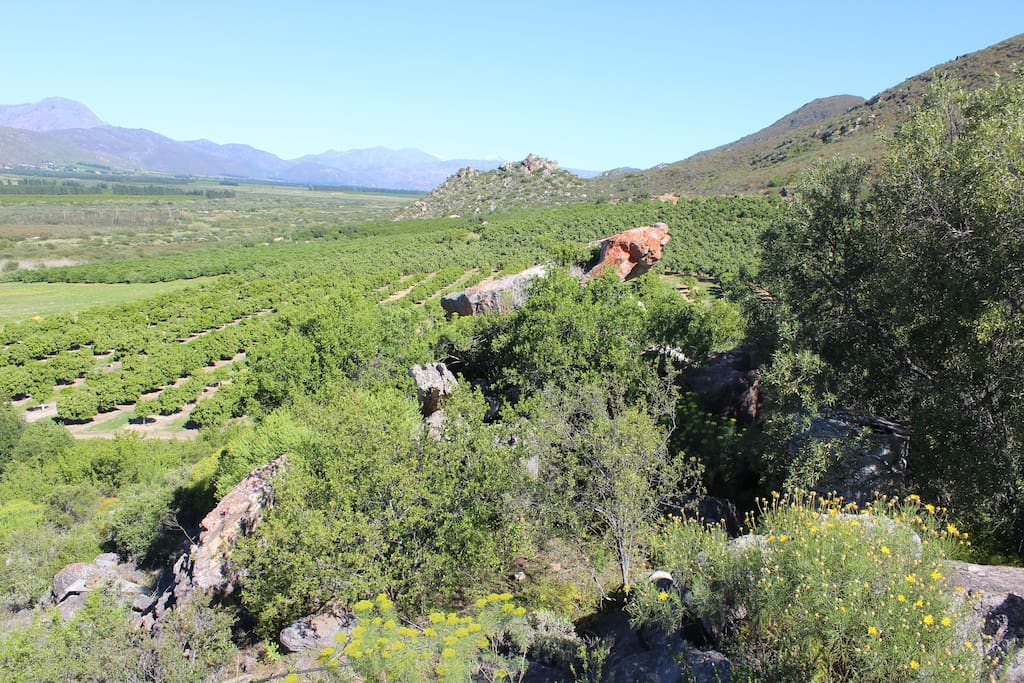 Citrus orchards with the Olifants valley in the background
