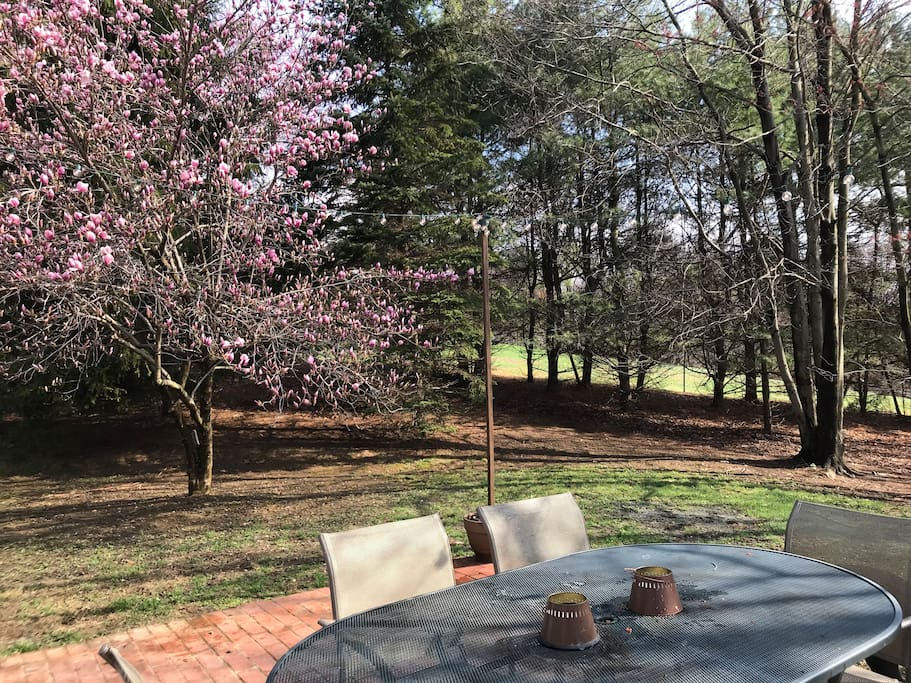 Backyard/Patio in the Early Spring.
