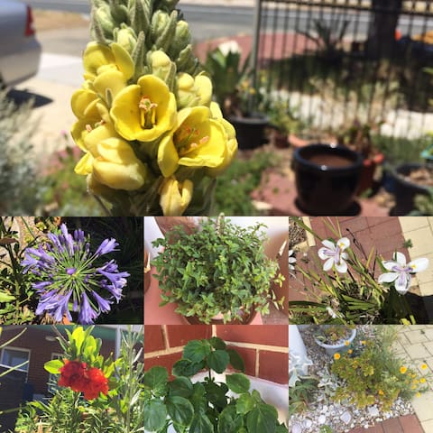 Some of the plants in our gardens