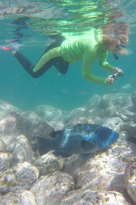 Private Snorkel tour with Manly local
