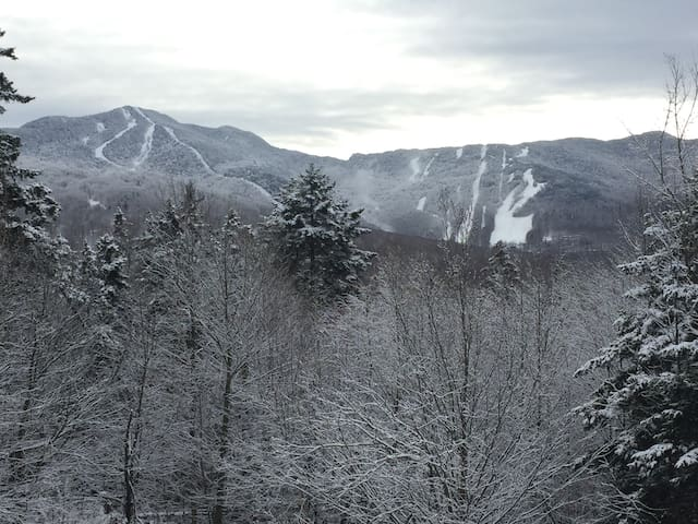 Snow Covered View