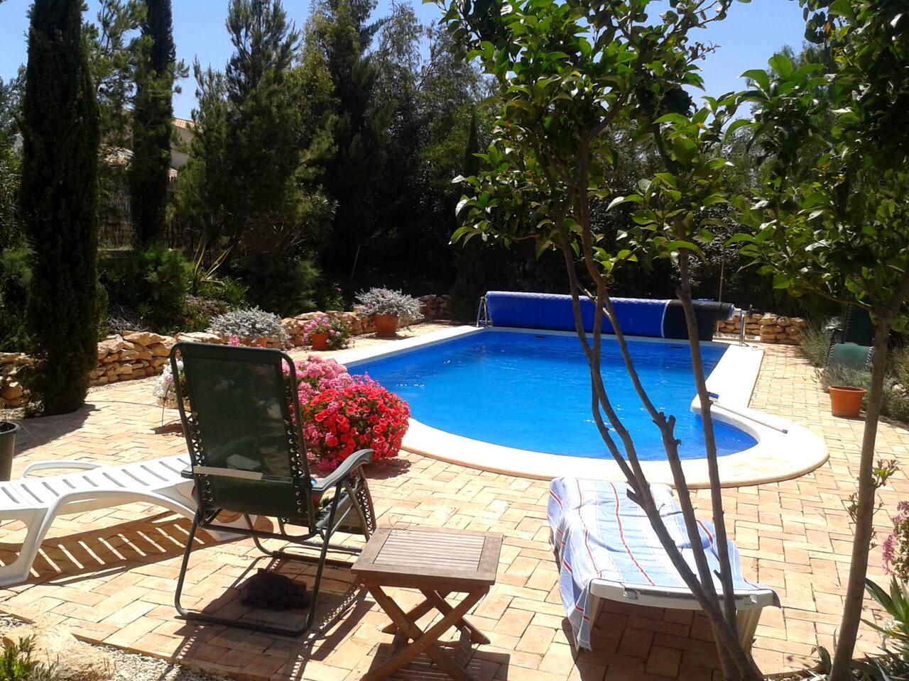 Le jardin et la piscine.