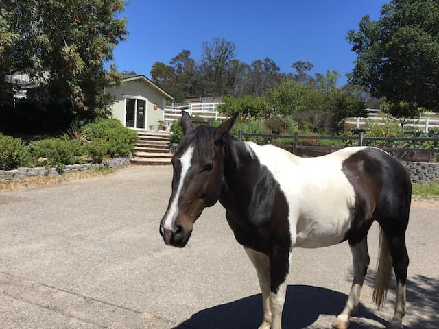 Don't be surprised if you are greeted by our horse Bella