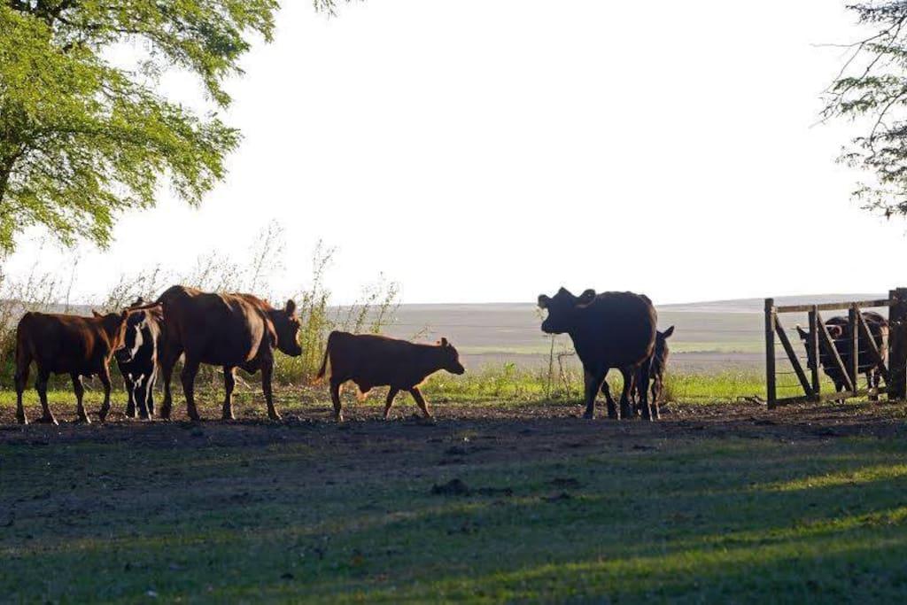 Actividades Agrícola Ganaderas