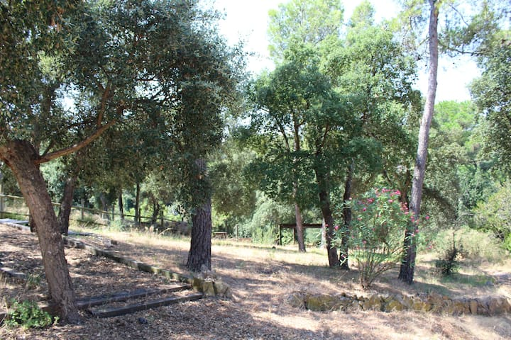 Plena naturaleza en el Baix Emporda (Costa Brava)