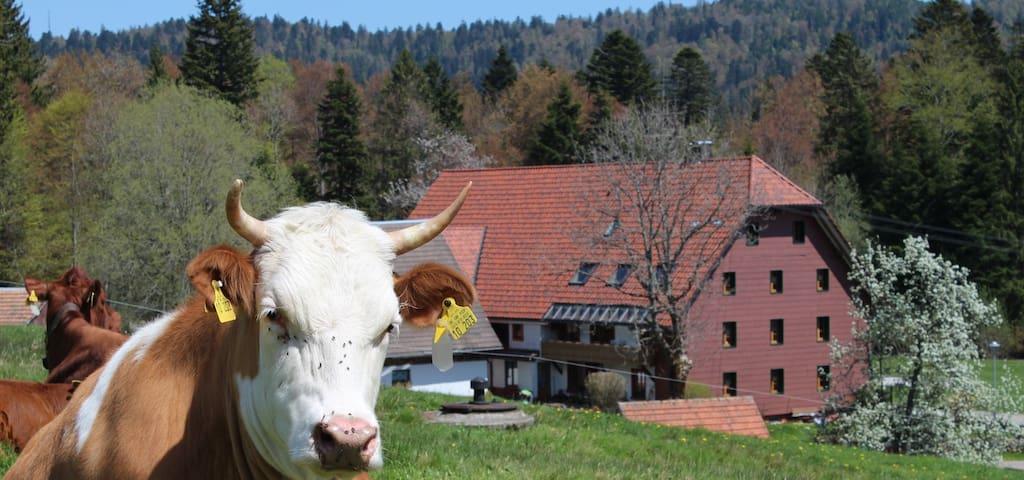Schwyzerhof Wohnung Sternblick - Todtmoos - Apartament