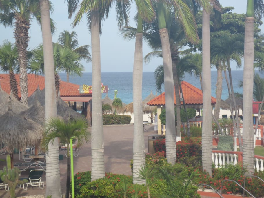 View of the beautiful palm trees surrounding the property.