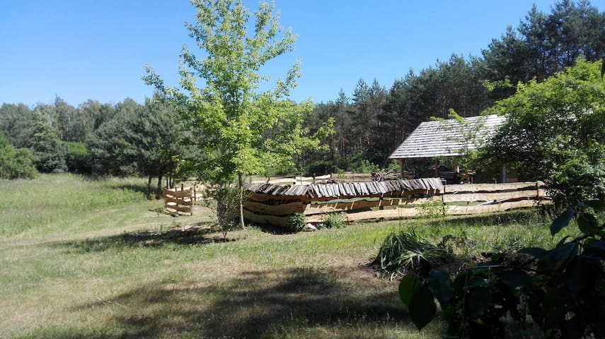 Little forest house near the Vistula River