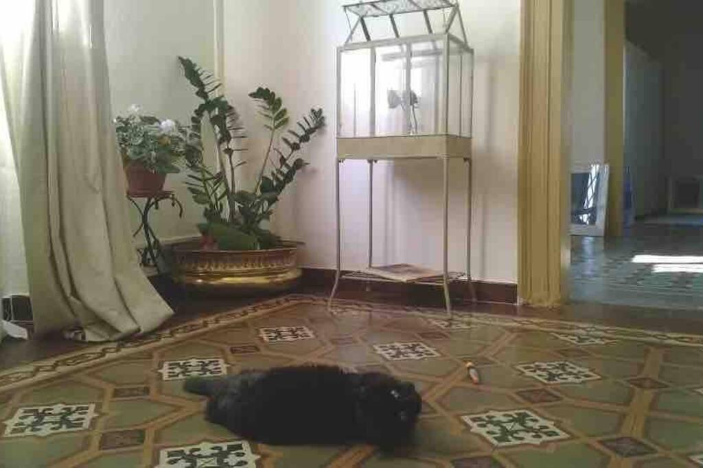 l'interno e Quattro, il nostro gatto :).