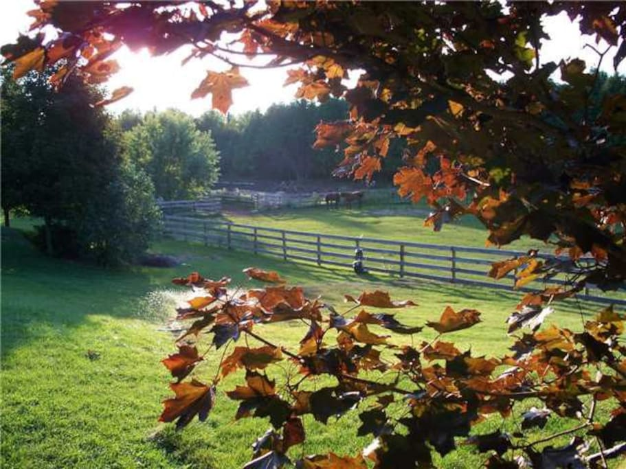 On calm days the sounds of horses grazing will lull you to sleep.