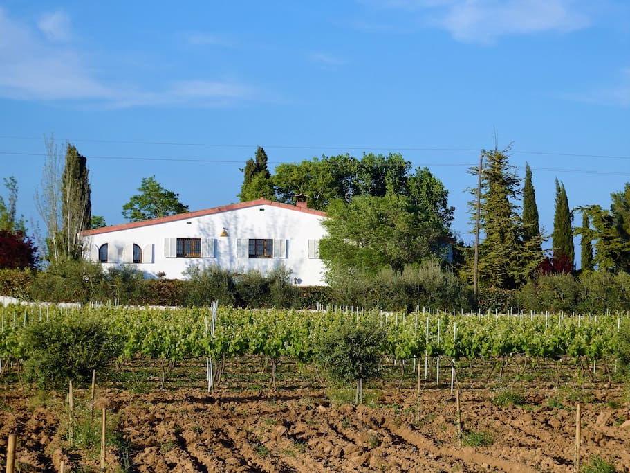 Mainhouse, vineyards and olive trees.