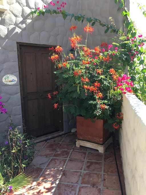 Mexican Bird of Paradise Front Door