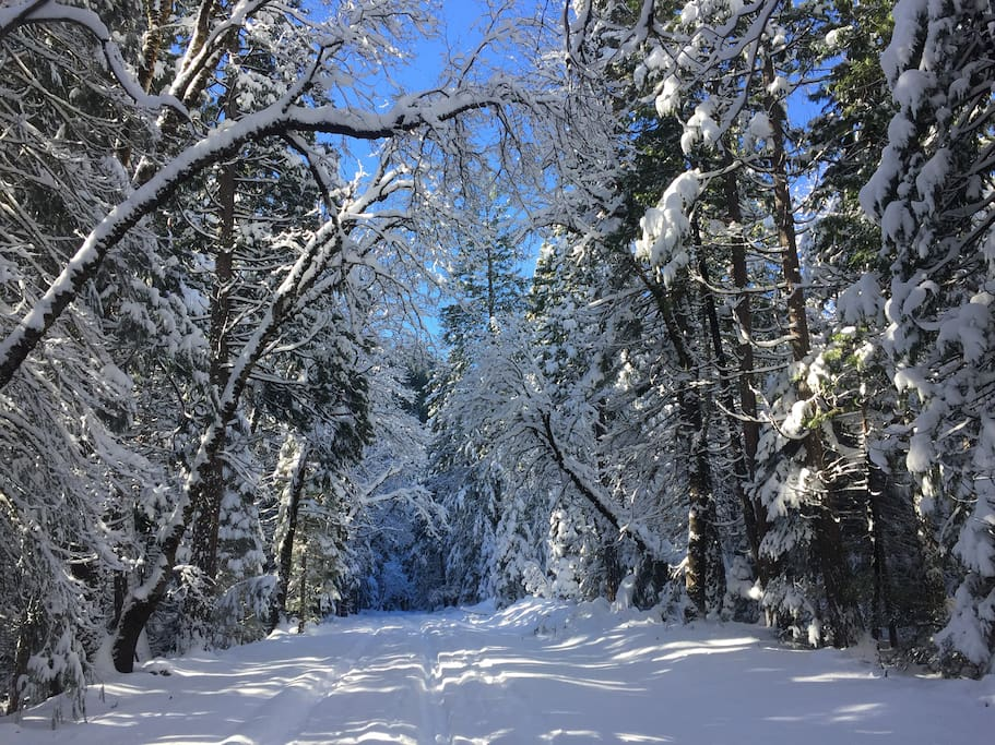 Great road for hiking, snowshoeing or XC skiing - short walk from cabin. Dec 2015