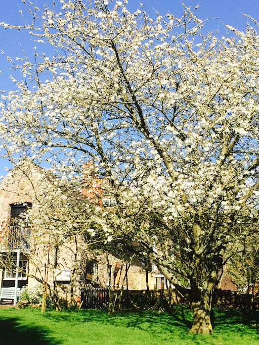 Spring Blossom in garden
