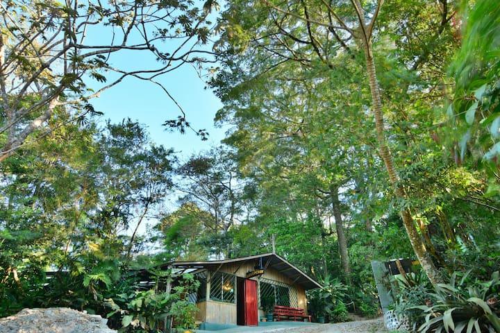 Mot Mot Room - Monteverde