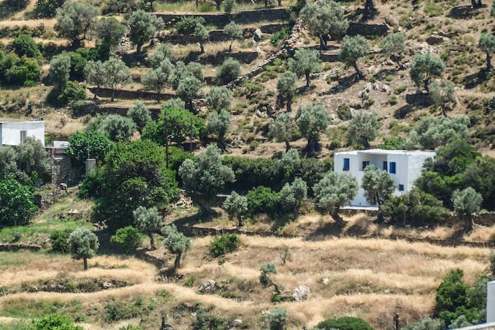 Surrounded by olive trees