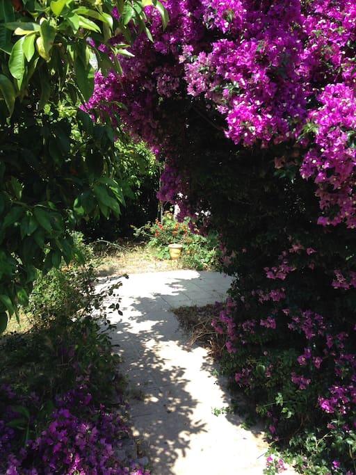 Rez de jardin dans quartier residenciel à 5 mn à pied du centre ville.