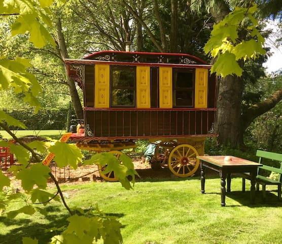Wild Billy's Wagon - *Rock your gypsy soul*