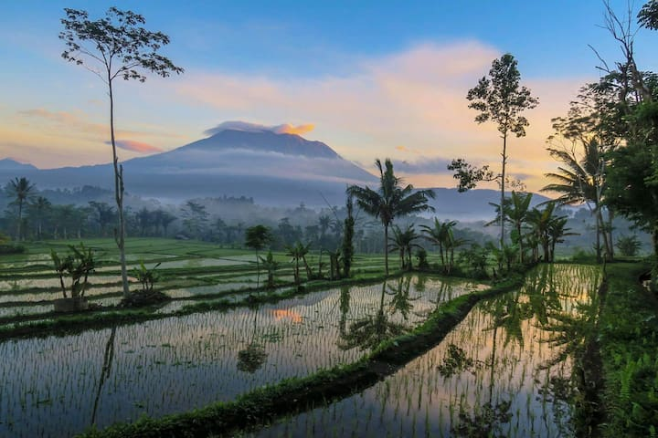 Walk the rice fields in the morning and you'll receive far more than you seek.