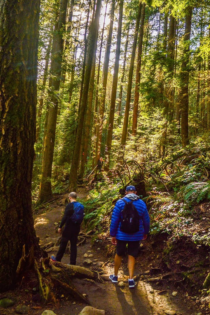 Exploring old-growth forests