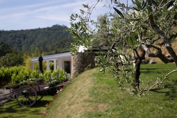 Cottage Orchidea