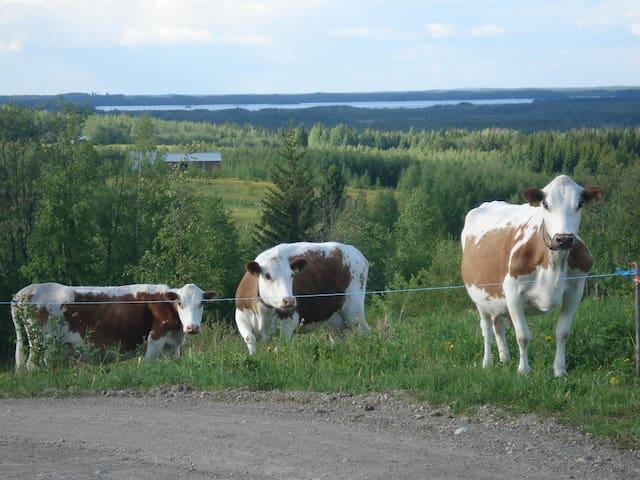 A cozy family farm