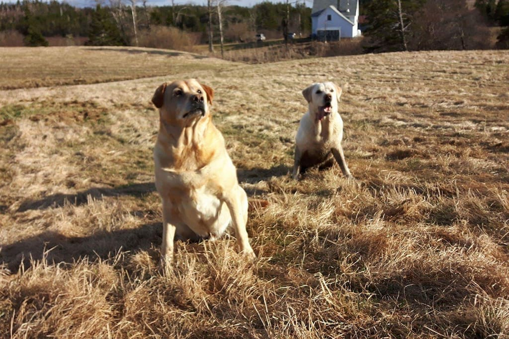 Fynn and Bruce in the hay field