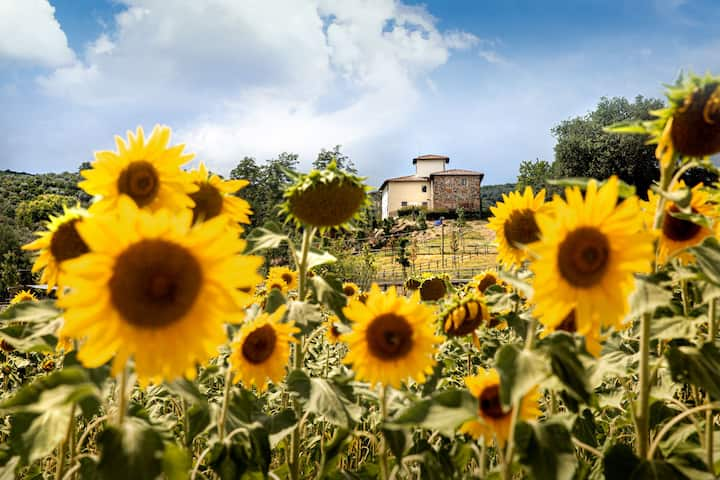 Bucolic farmhouse in Chianti