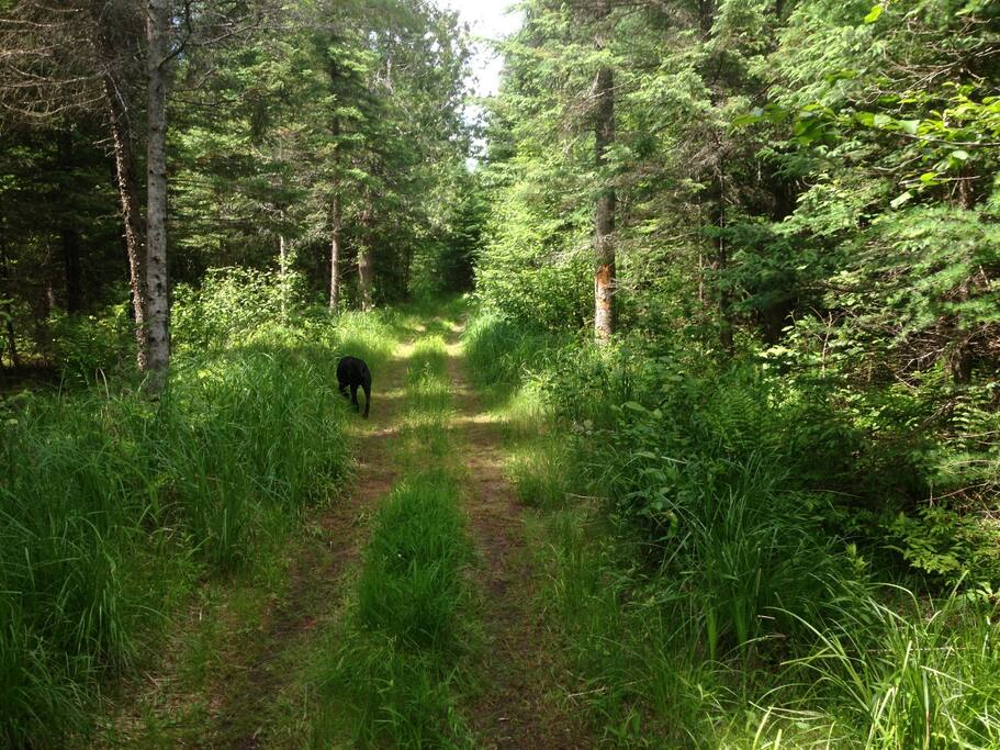 Trail from cabin to West Branch River.
