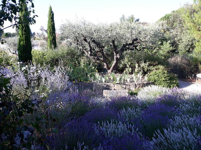 L'Absinthe  un coin de nature aux portes d'Avignon