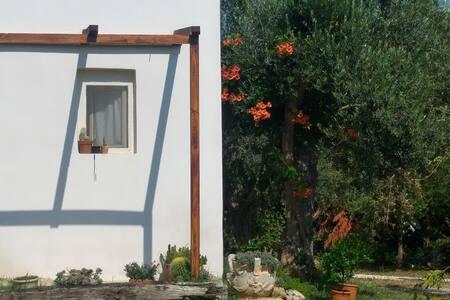 Single room agriturismo il giardino fra gli ulivi