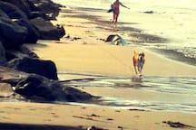 Les plages sauvages entre saint-Jean-du-doigt et Beg ar Fri !!