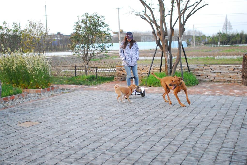 带上自己的狗狗和大自然拥抱