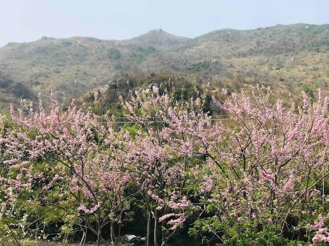 Oceanamie Villa,  bình yên cạnh núi Minh Đạm