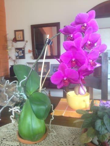 Casa de Las Orquídeas