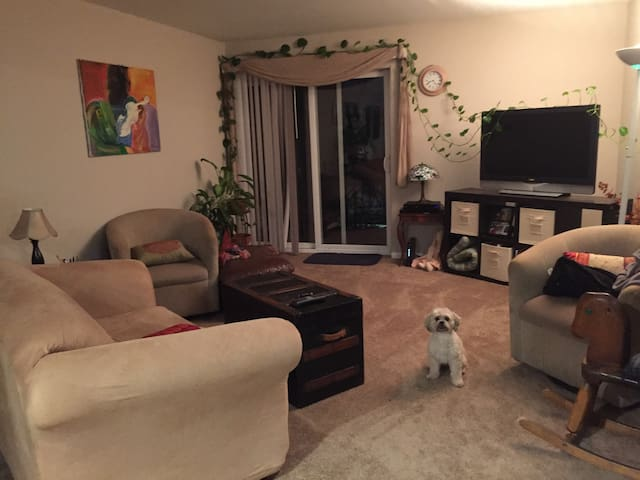 Shared Apartment with basics - Carol Stream - Apartment