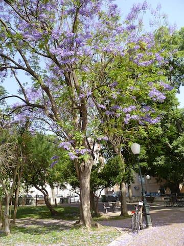 The Park at Campo de Santa Clara (Feira da Ladra)