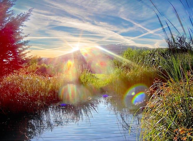 AUSWEICHEN: Aussicht Garten Schwimmteich bei Wien