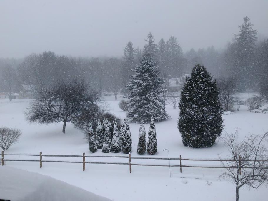 Winter Scene...Rear Entry