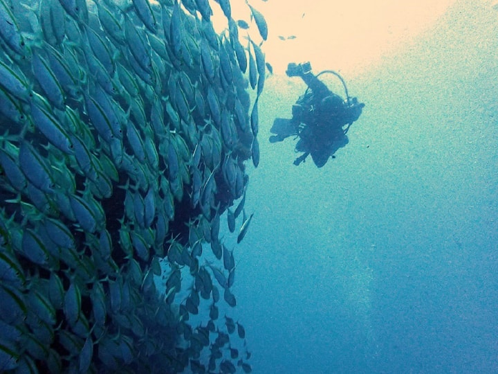 School of fish on the dive site