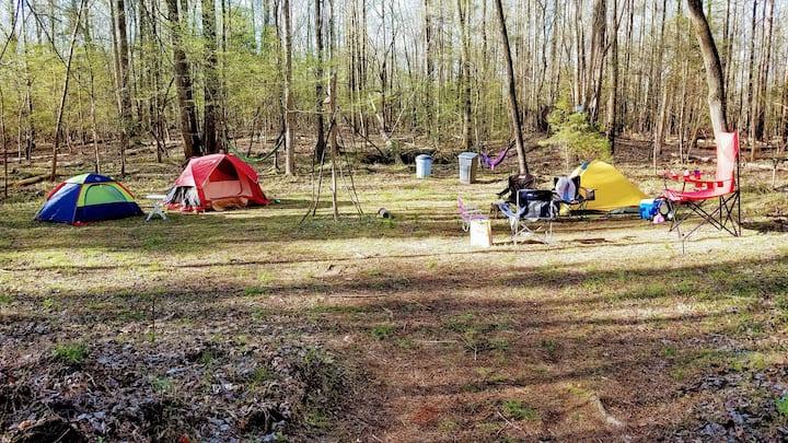 Campsite in Pristine Paradise Woodland Retreat