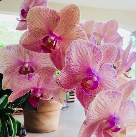 Orchid at Casa Tre Fiori