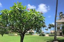 Ocean view Studio - Kauai