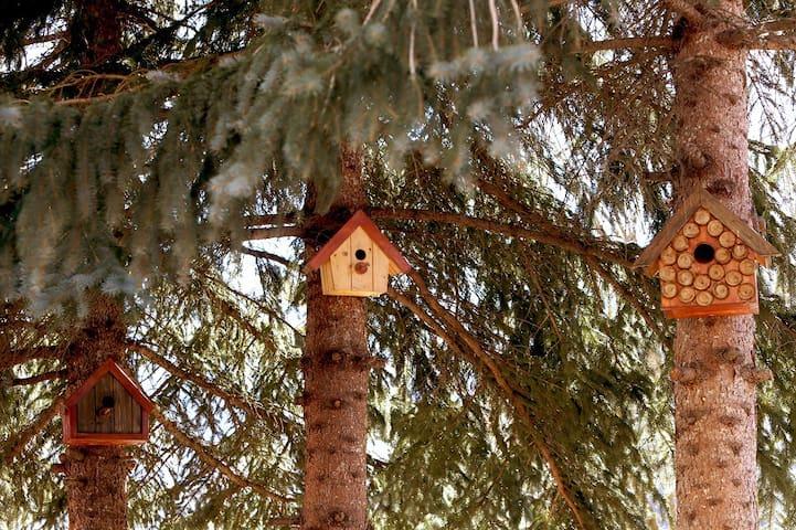 Birdhouses at Daravand